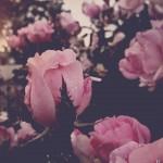 vanessa_ray_flower_20