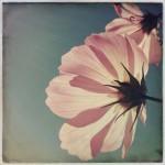 vanessa_ray_flower_21