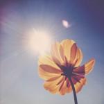 vanessa_ray_flower_24
