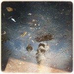 Donna-Donato-Reflections-10