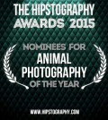 Animal-Photography-00