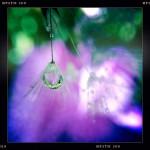 Jill-Lian-Morning-Light-01