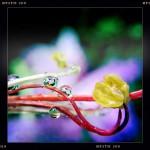Jill-Lian-Morning-Light-03