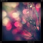 Jill-Lian-Morning-Light-18