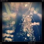 Jill-Lian-Morning-Light-24