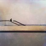 Stephen-Littrell-Distant-View-10