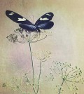 kathleen-magner-rios-uneasy-dreams-00