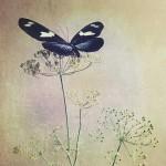 kathleen-magner-rios-uneasy-dreams-12