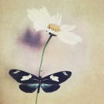 kathleen-magner-rios-uneasy-dreams-15