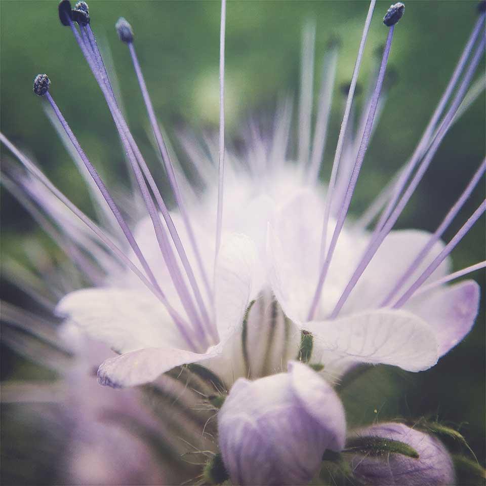 Kristiina-Hakovirta-Flowers-01