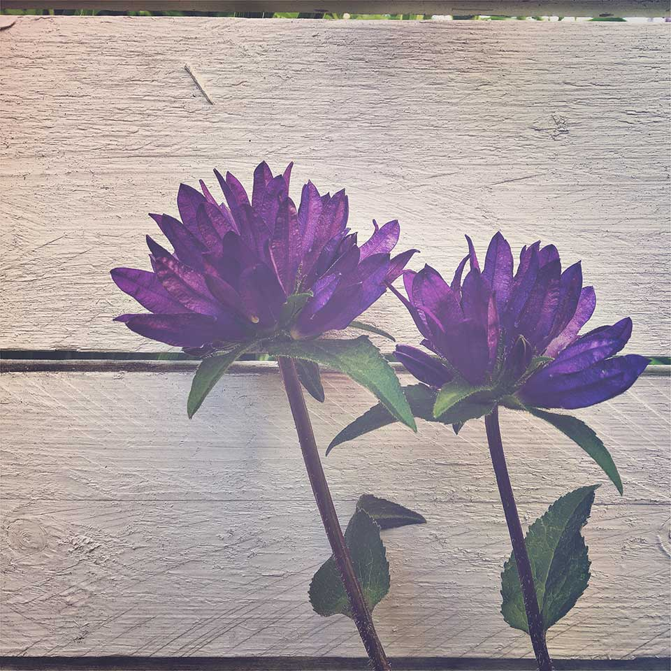 Kristiina-Hakovirta-Flowers-04