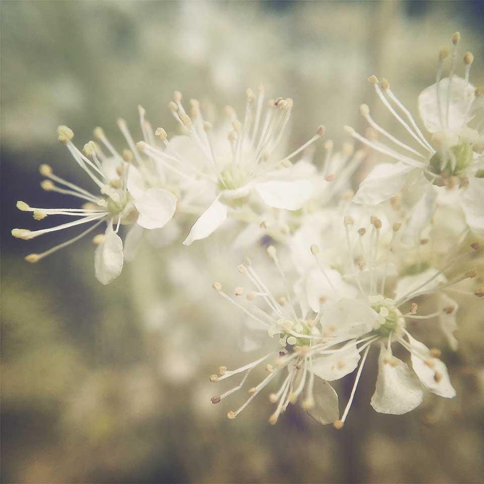 Kristiina-Hakovirta-Flowers-07
