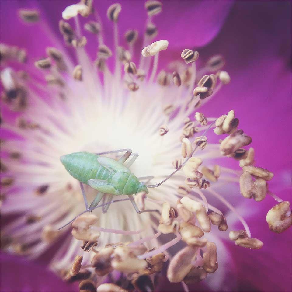Kristiina-Hakovirta-Flowers-11