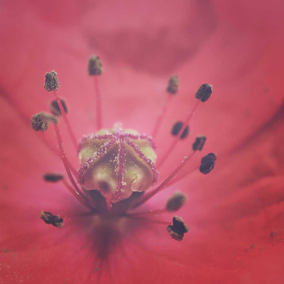 Kristiina-Hakovirta-Flowers-13