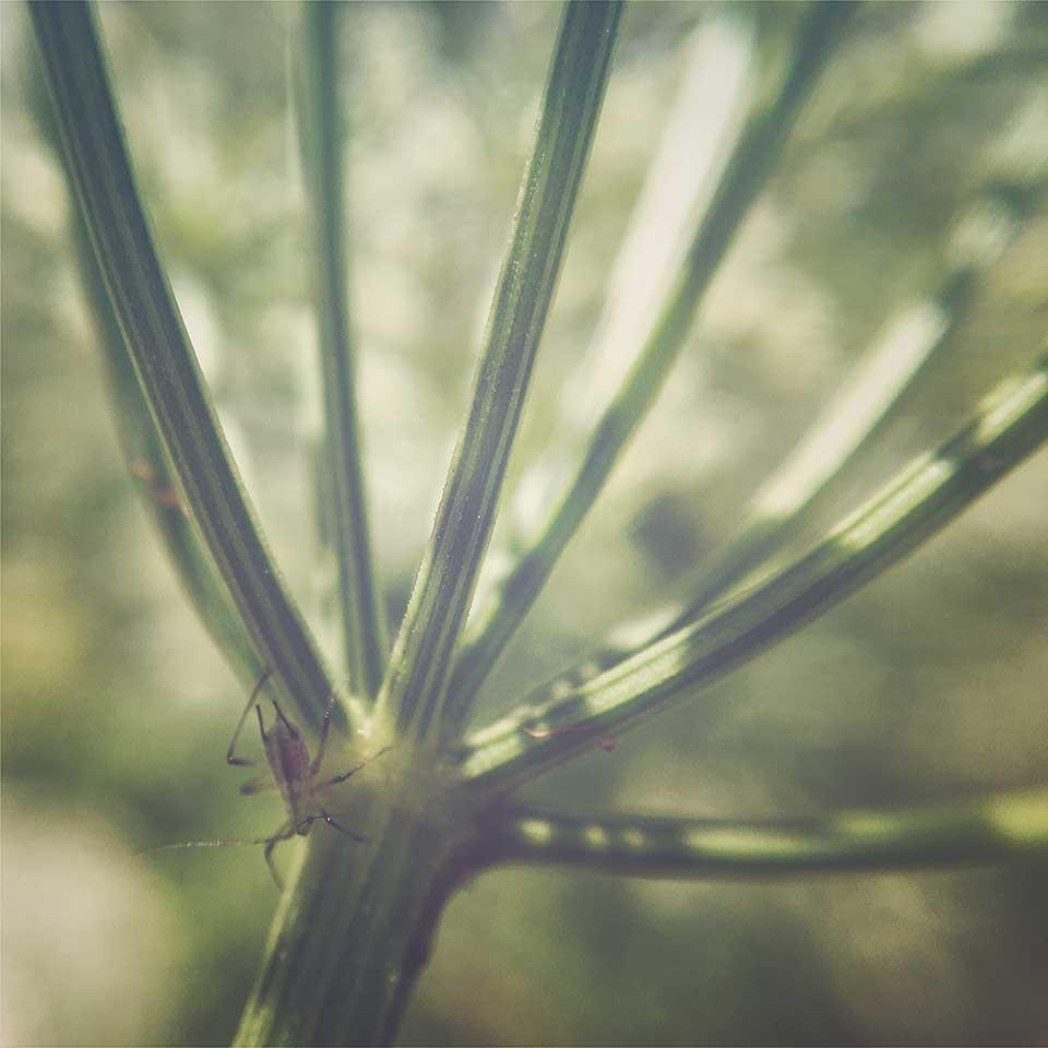 Kristiina-Hakovirta-Flowers-19