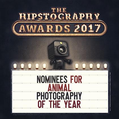 Awards-2017-Nominees-Animal-00