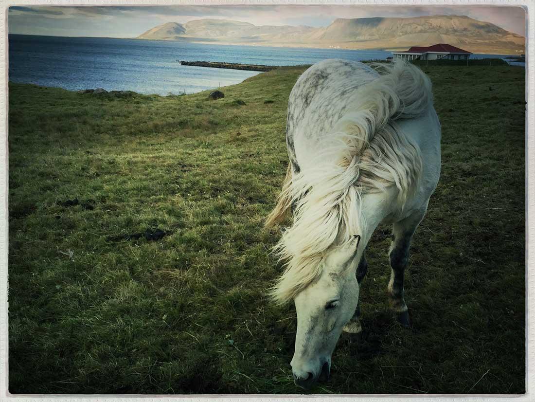 David-Brown-Iceland-15