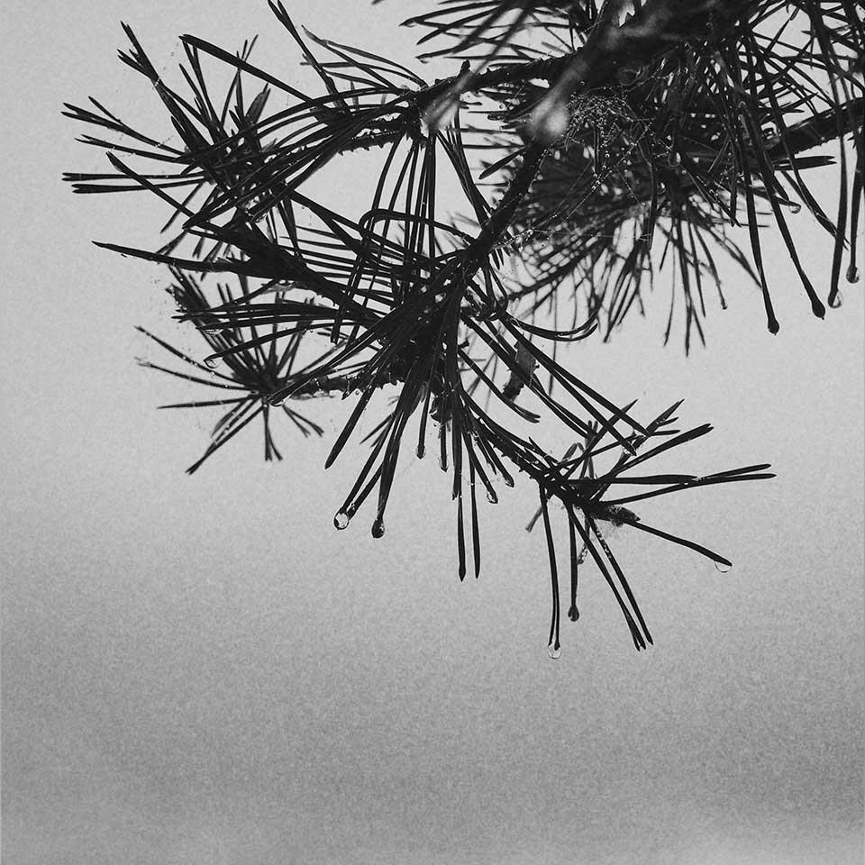 Birgit-Kwasniewski-Grayscale-04