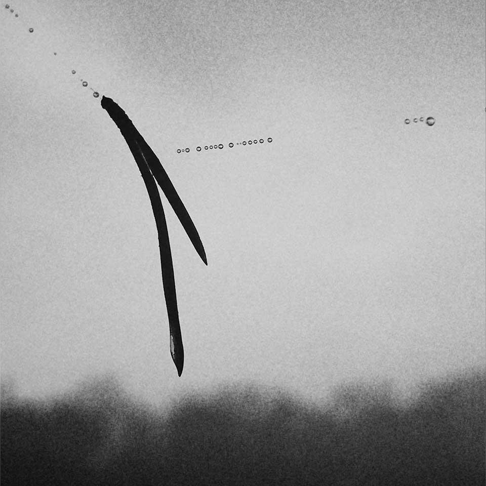 Birgit-Kwasniewski-Grayscale-06