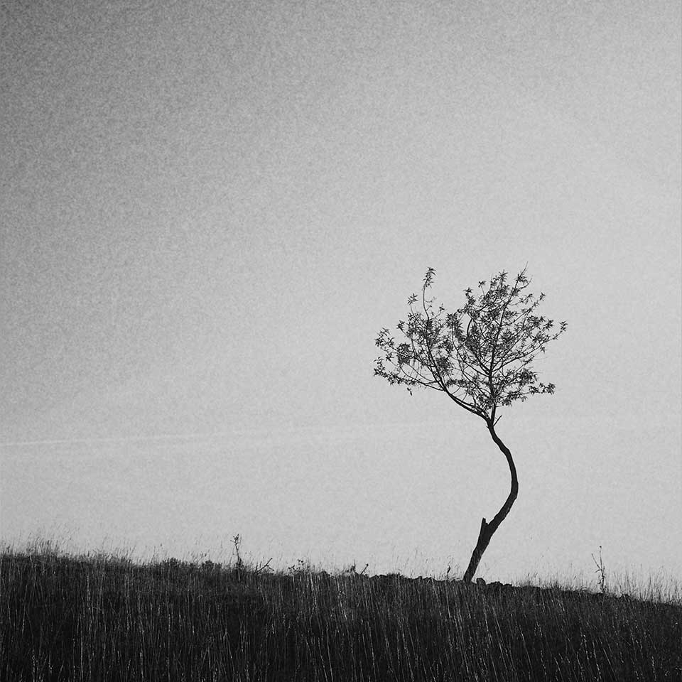 Birgit-Kwasniewski-Grayscale-11
