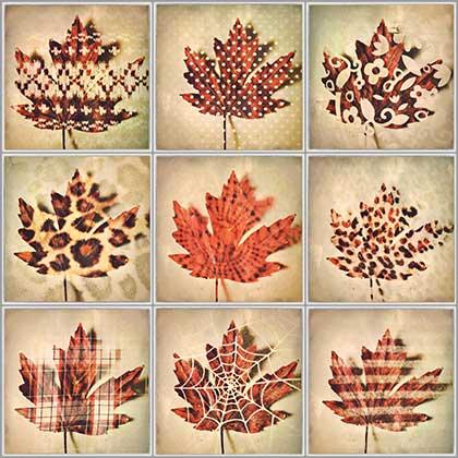Kat-Meininger-Red-Maple-Leaf-00