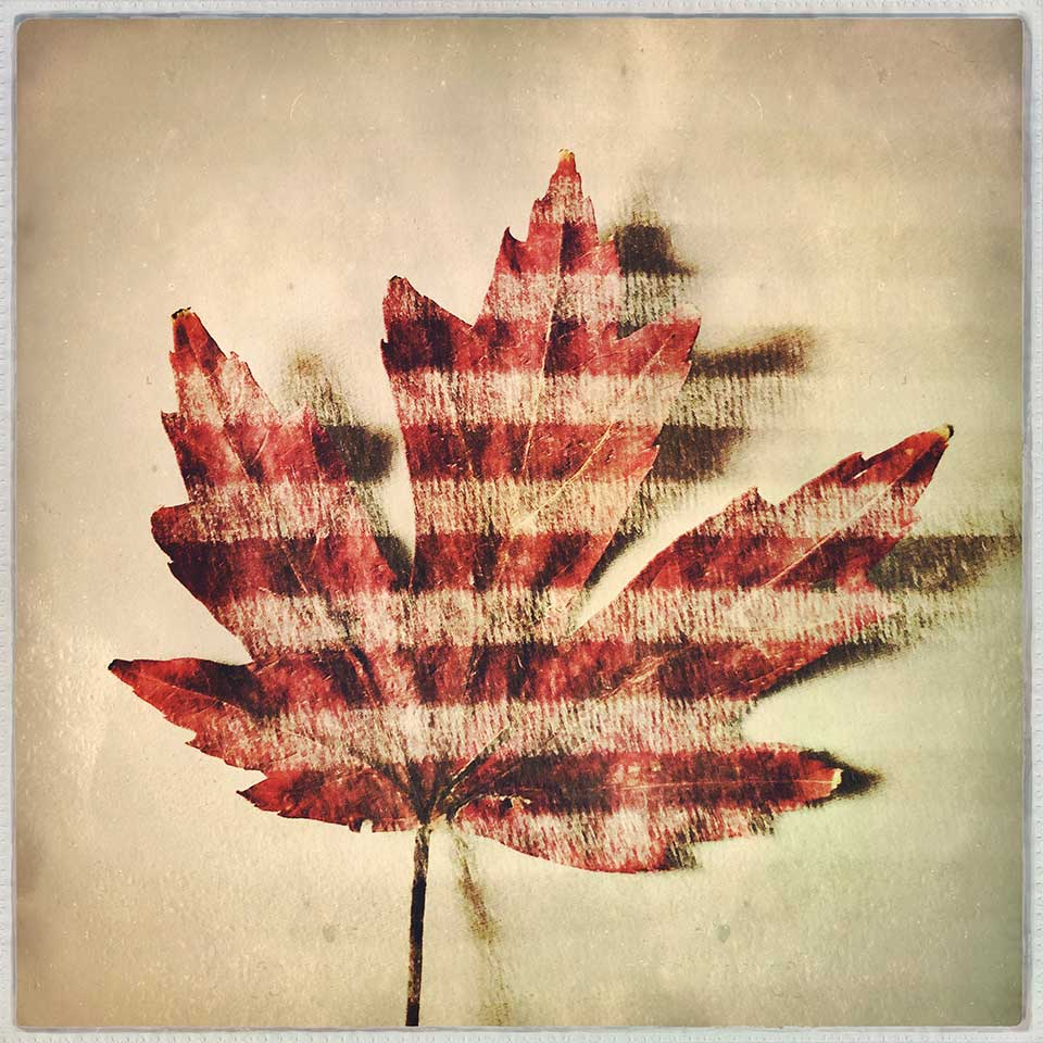 Kat-Meininger-Red-Maple-Leaf-01