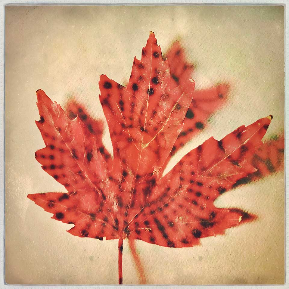 Kat-Meininger-Red-Maple-Leaf-03
