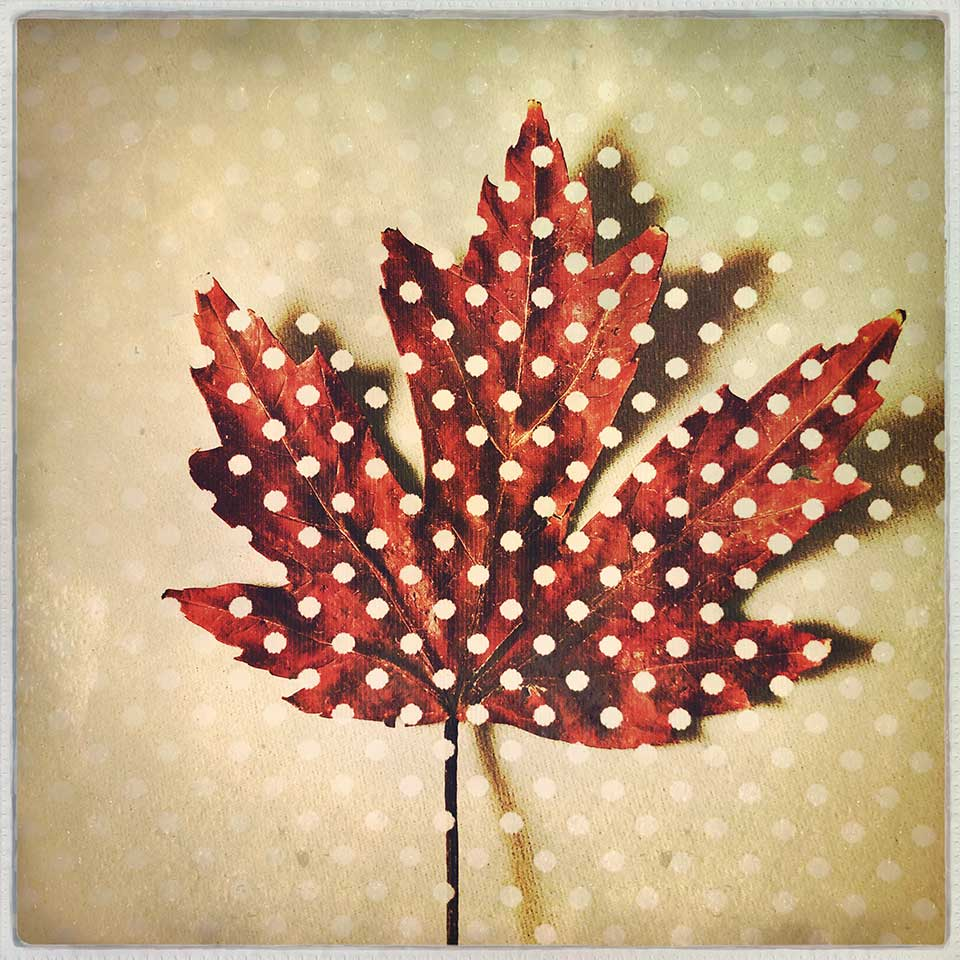 Kat-Meininger-Red-Maple-Leaf-05