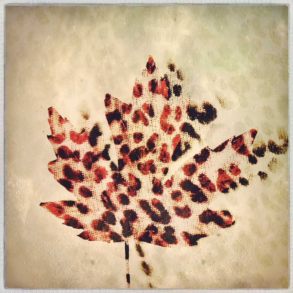 Kat-Meininger-Red-Maple-Leaf-06