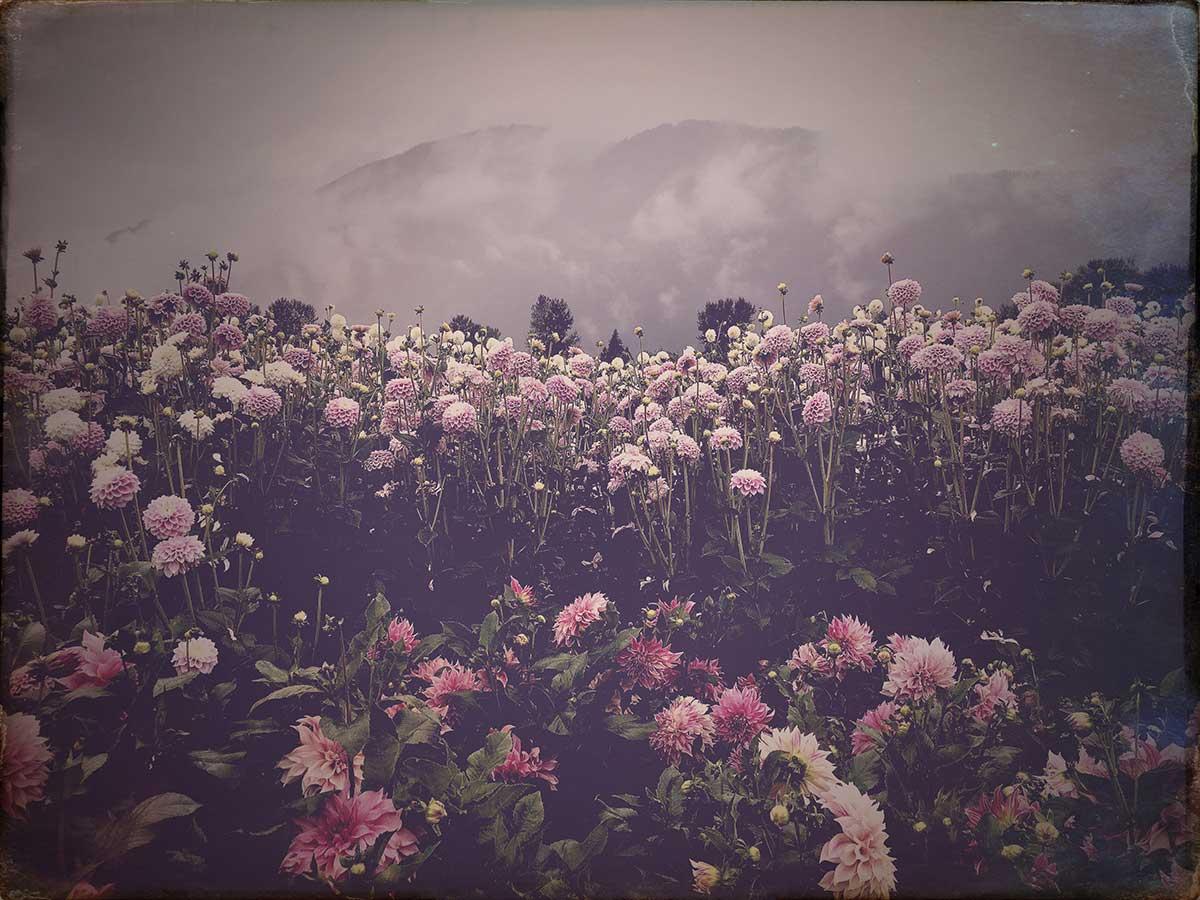 Lee-Atwell-portfolio-2019-07