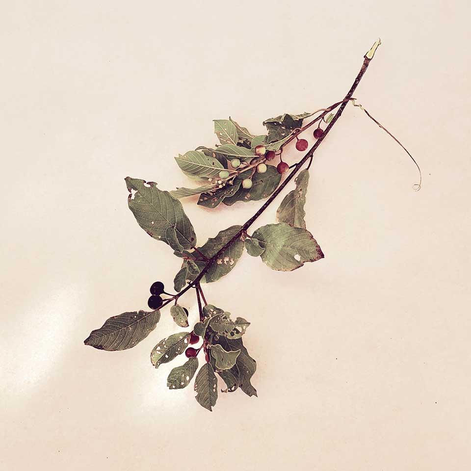 Marina-Macchi-Botanical-findings-02