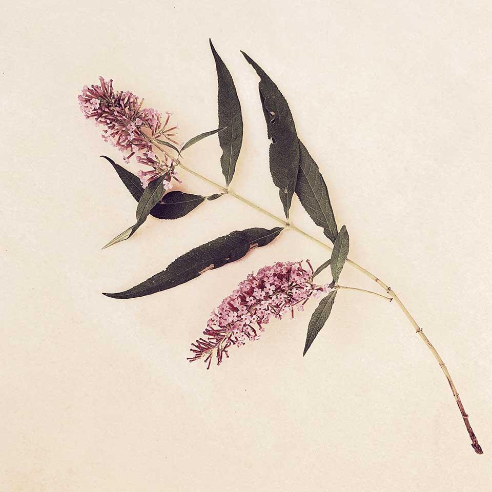 Marina-Macchi-Botanical-findings-04