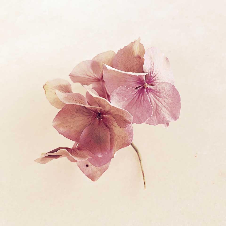 Marina-Macchi-Botanical-findings-05