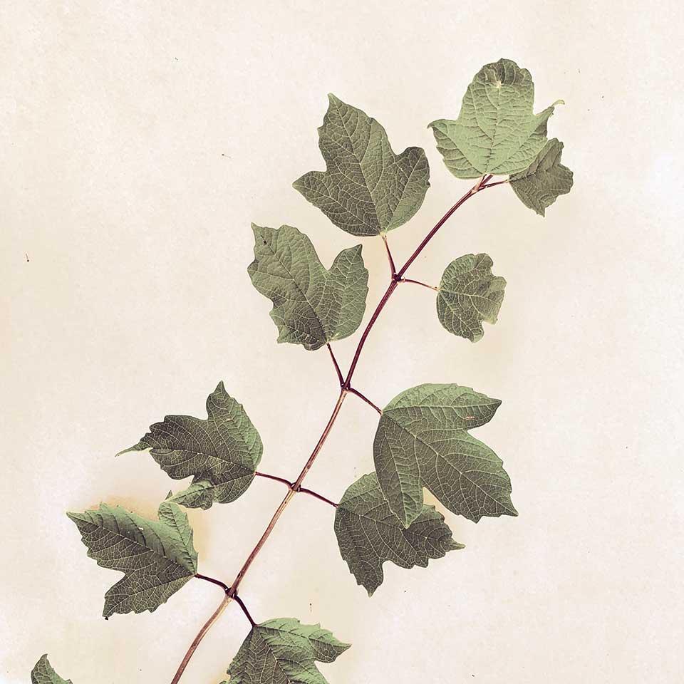 Marina-Macchi-Botanical-findings-06