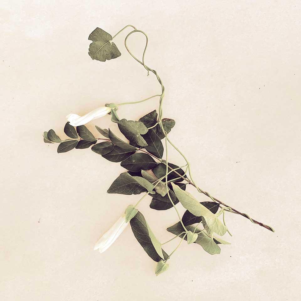 Marina-Macchi-Botanical-findings-07