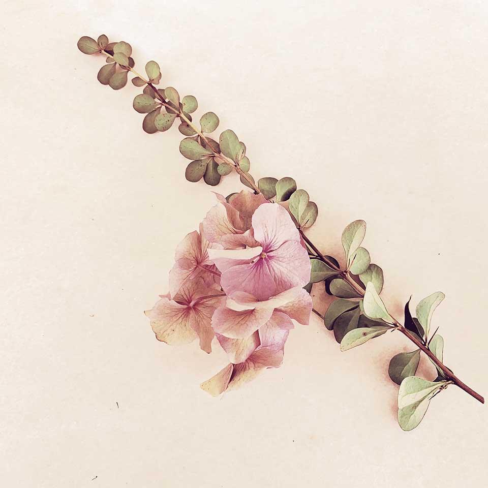 Marina-Macchi-Botanical-findings-09