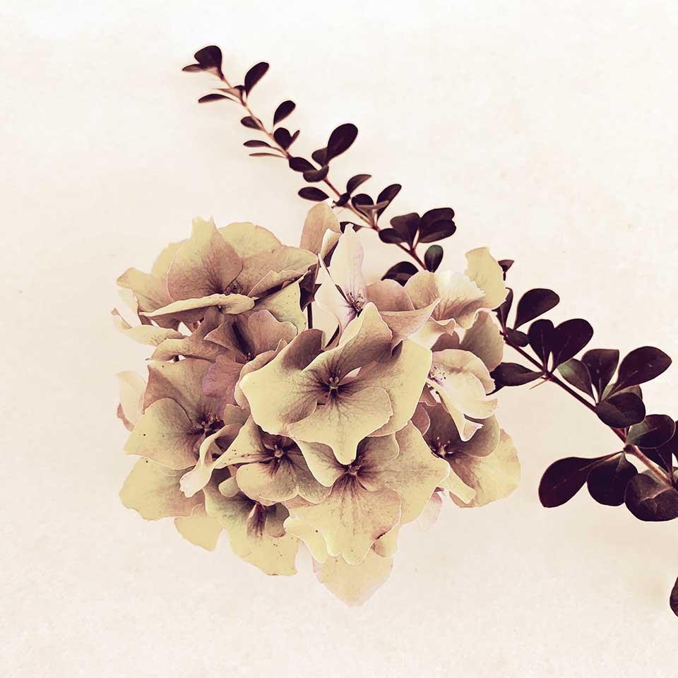 Marina-Macchi-Botanical-findings-10