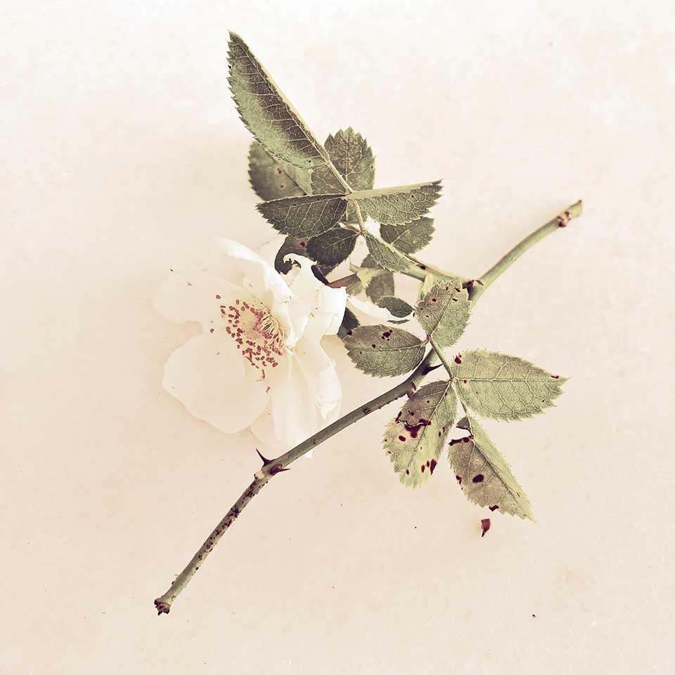 Marina-Macchi-Botanical-findings-11