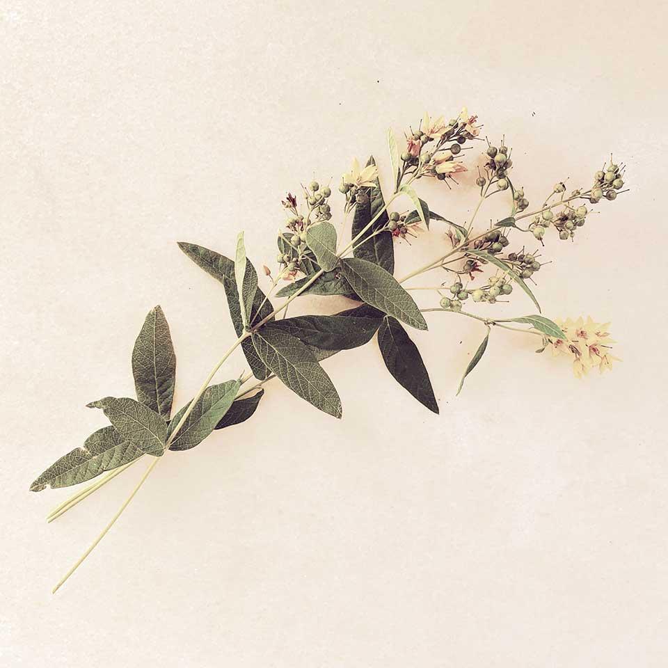Marina-Macchi-Botanical-findings-13