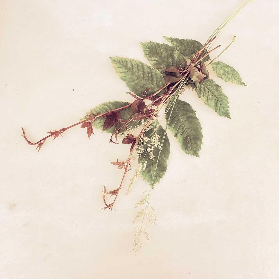 Marina-Macchi-Botanical-findings-15