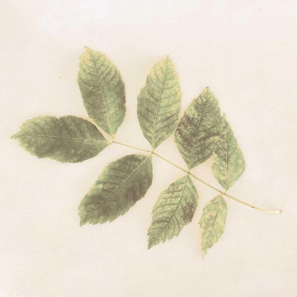 Marina-Macchi-Botanical-findings-16