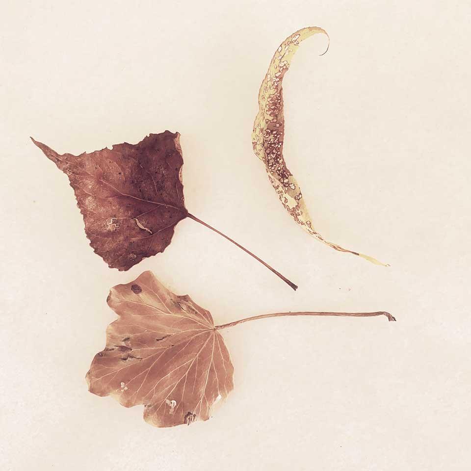 Marina-Macchi-Botanical-findings-19