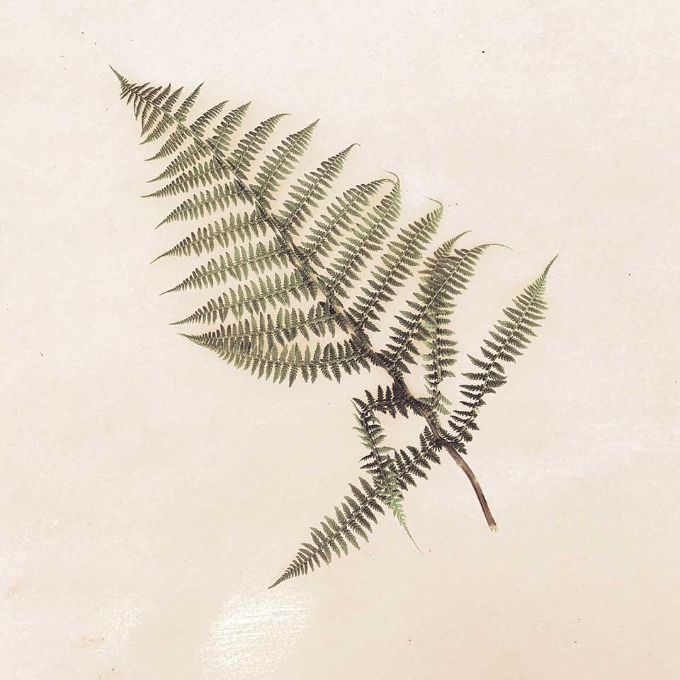 Marina-Macchi-Botanical-findings-21