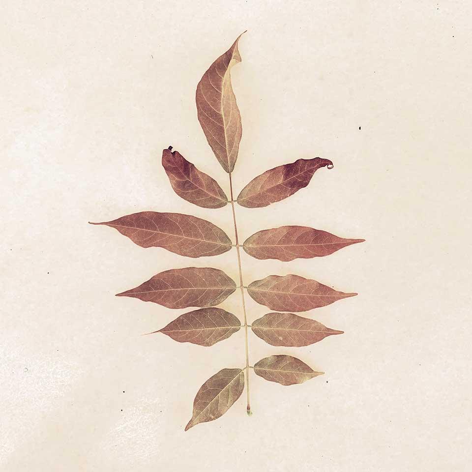 Marina-Macchi-Botanical-findings-22