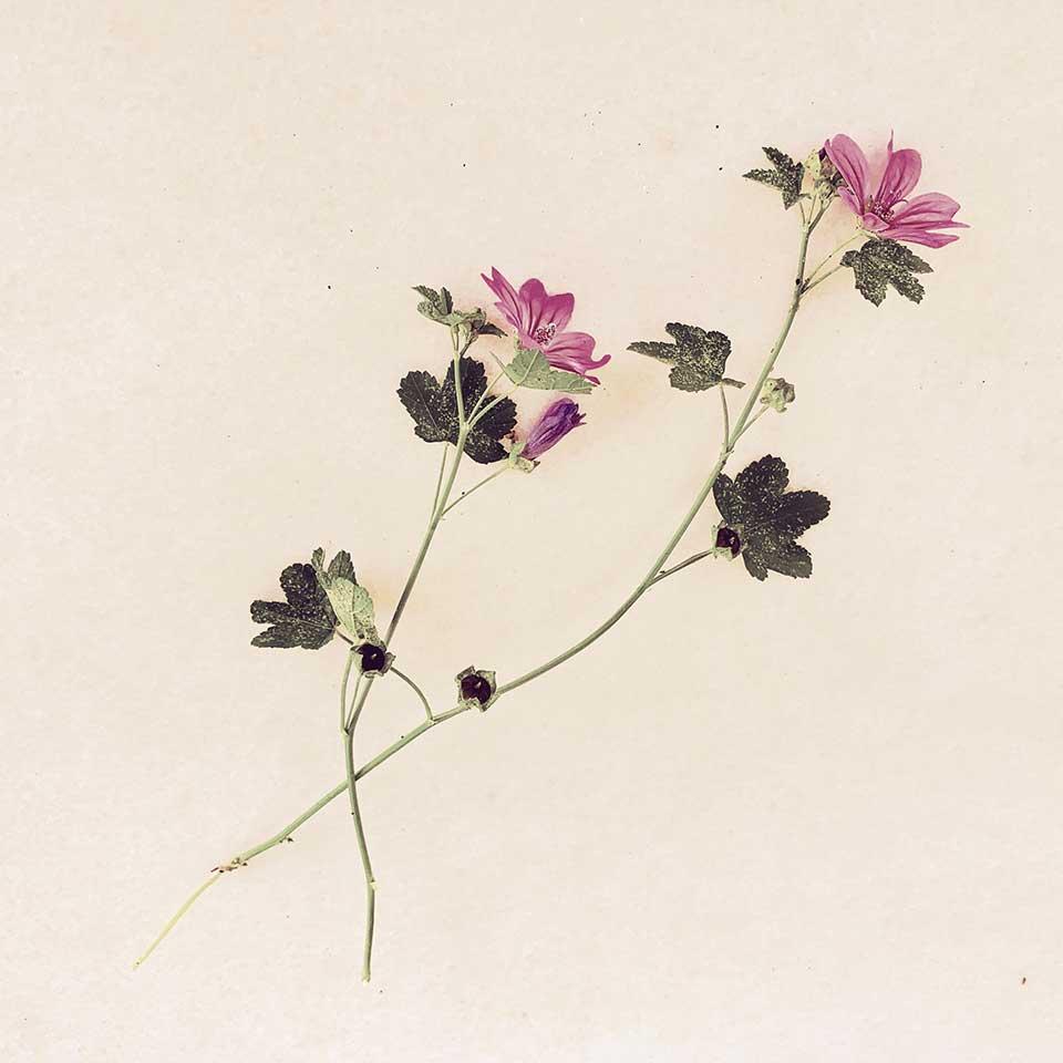 Marina-Macchi-Botanical-findings-24