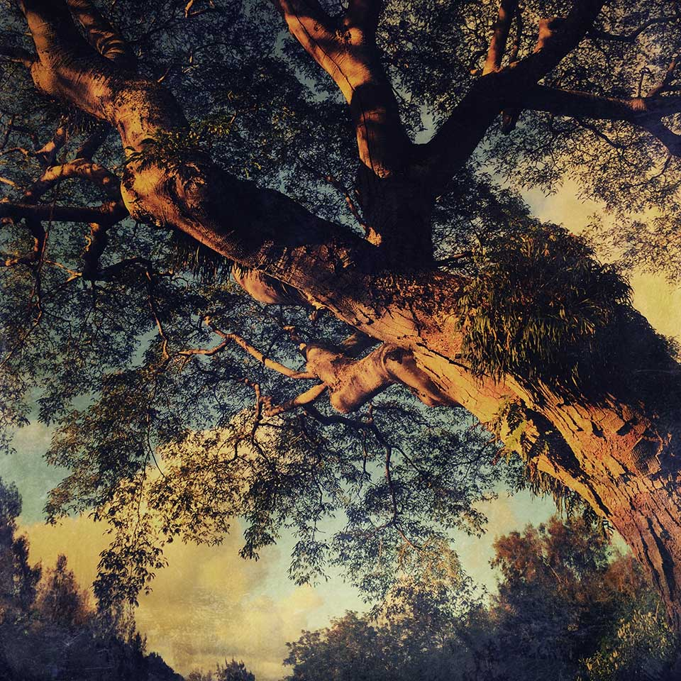 1226-Lydia-Cassatt